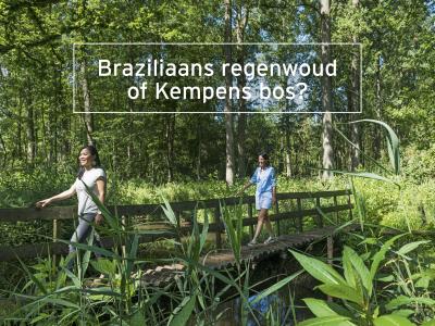 Wandelen door Brazilië of de Kempen?