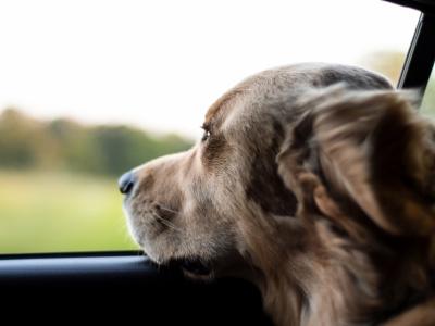 Weekendje weg met je hond
