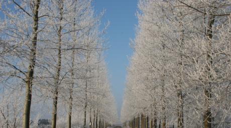 Winter Wandel Arrangement