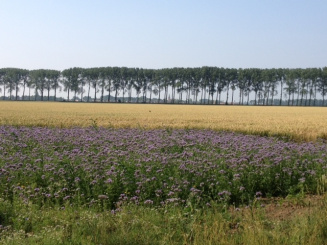 zomer-Hellenpolder-Zonnebrug-IMG_0722.JPG