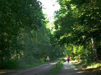 Bos naast Herten Tien 2_0.jpg