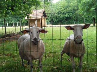 de-zoete-kastanje-schapenwei-1030x548.jpg