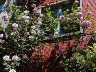 2. gevel rozen in volle glorie 2020.jpg