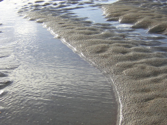 zee.JPG