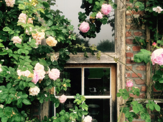 rozen raam.jpg