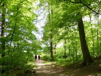 activiteit - wandelen in  natuur.jpg