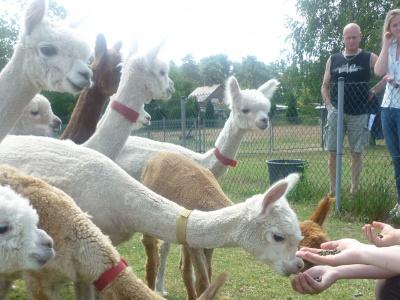 Alpacaboerderij