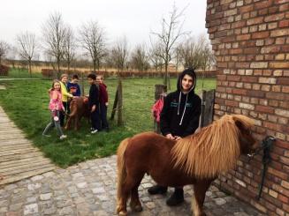 pony's en kinderen Domein Rietvelde.JPG