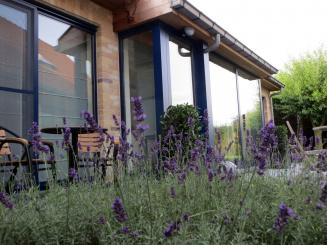 terras met lavendel.jpg