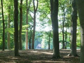 Het bos naast HertenTien.JPG