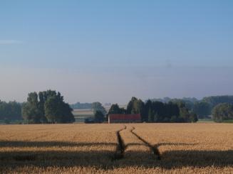 uitzicht op het veld zomer - Villa Veldzicht.JPG